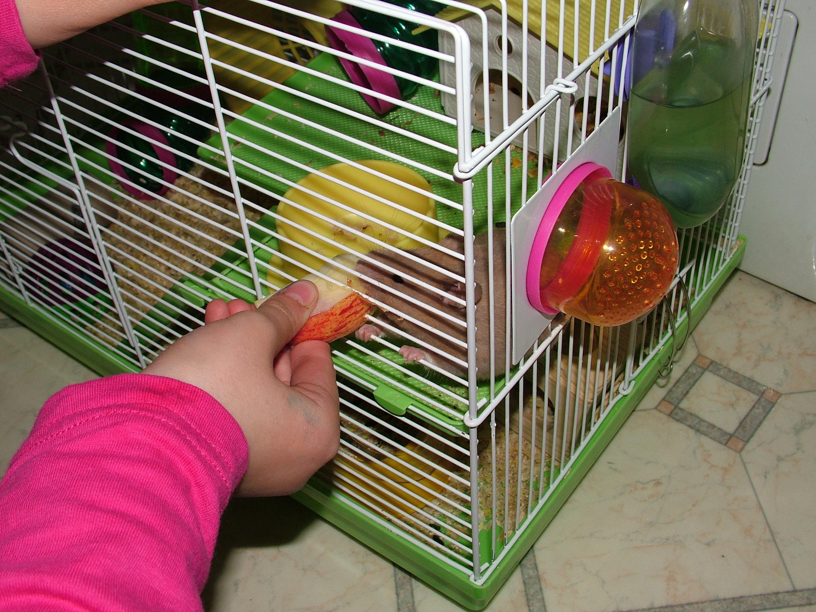 hamster, apple